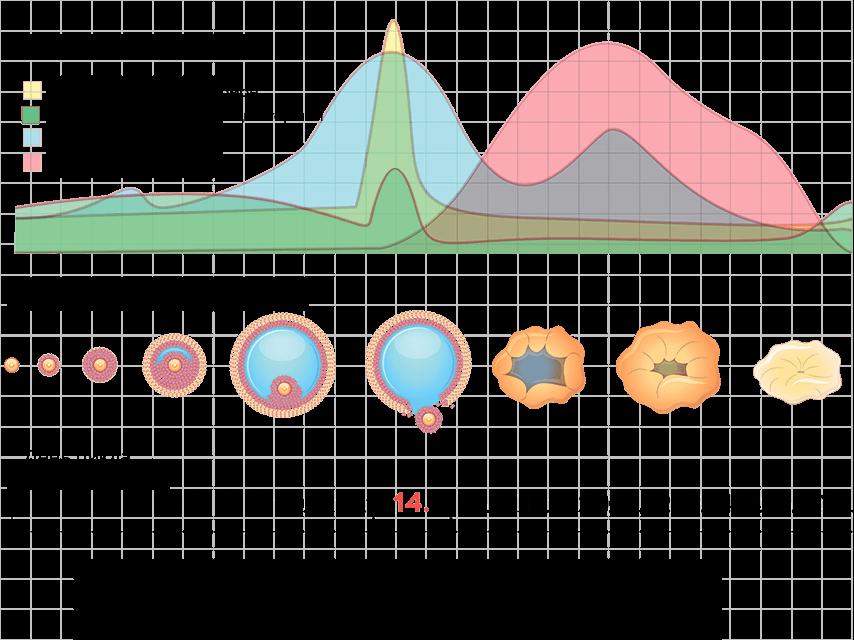 Диаграмма цикла для календарного метода